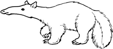 anteater 13 coloring page supercoloring com