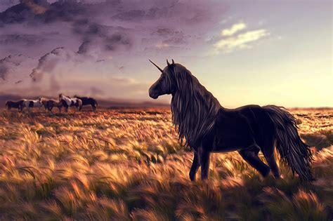 imagenes de unicornios magicos papeis de parede m 225 gicos animais unic 243 rnios cos cavalo