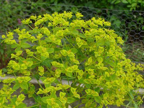 1 mifflin place 3rd floor suite 300 cambridge ma plant and flower nursery guzmania plant care tips the