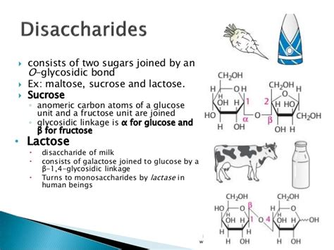 carbohydrates lactose carbohydrates