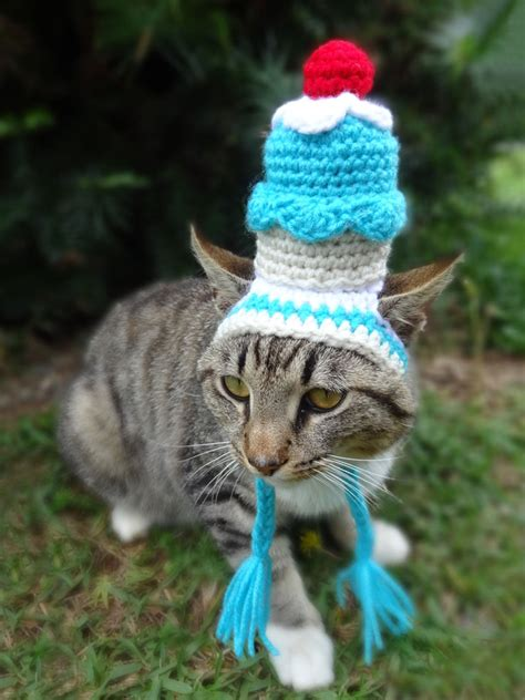 cat in hat the nature of things cats in hats