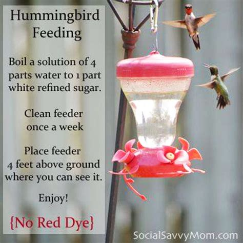 25 best hummingbird food mixture ideas on pinterest