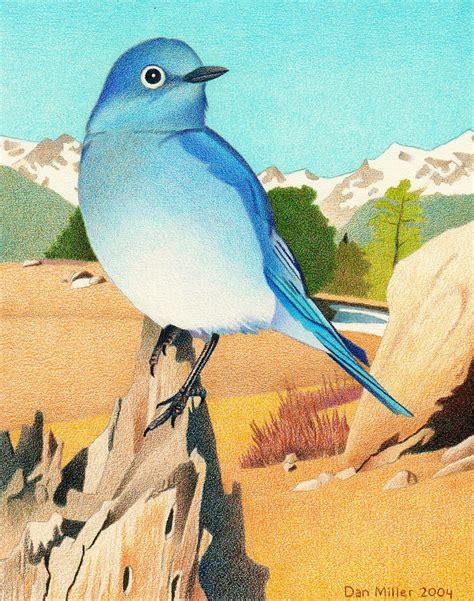 Alpine Duvet Cover Mountain Bluebird Drawing By Dan Miller