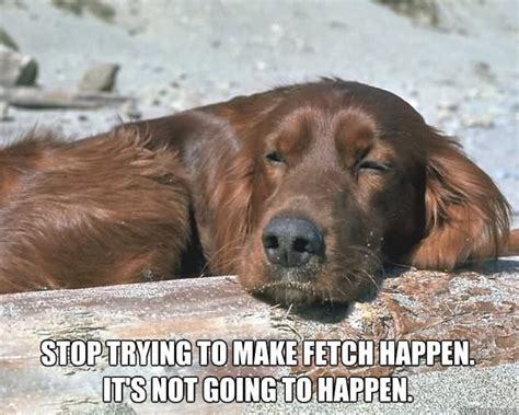 stop trying to make fetch happen meme 35 funniest lazy meme pictures that will make you laugh