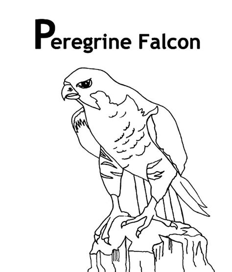 falcon bird coloring coloring pages