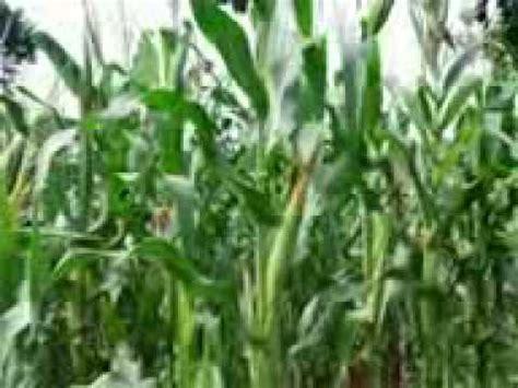 Biosur Pupuk Organik 3 cara pembuatan pupuk organik cair rb3pthwskenanti