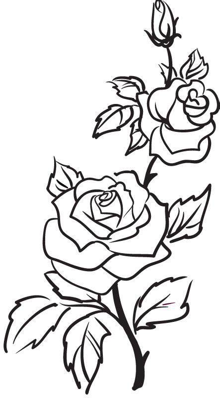 drawing pattern of rose two roses outline rose flowers wall stickers wall art