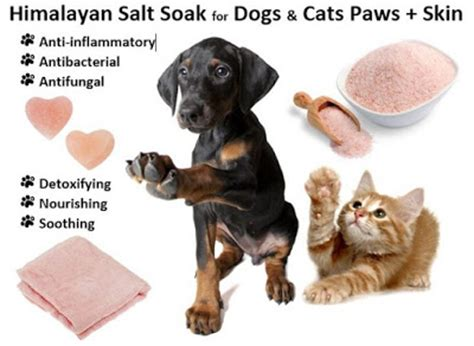 can dogs salt ottawa valley whisperer himalayan salt soak for dogs cats paws skin soothe