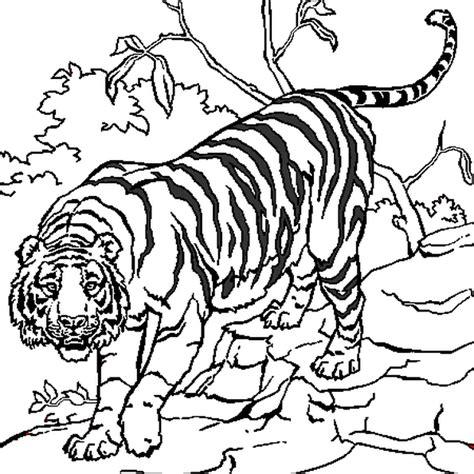 Coloriage Tigre En Ligne Gratuit 224 Imprimer