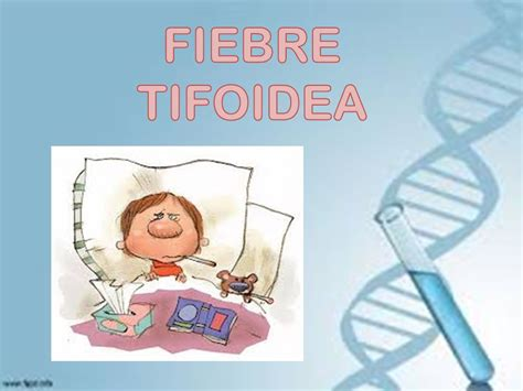 fiebre en las gradas 8433974777 fiebre tifoidea ppt video online descargar