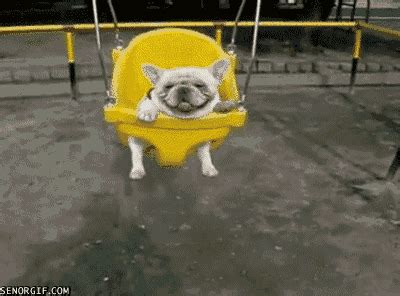 dog in baby swing dog in baby swing animated gif 7995 animate it