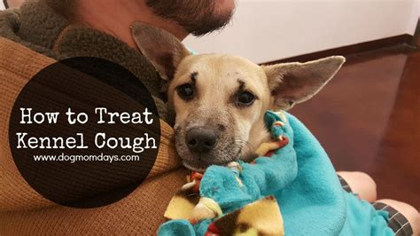 how to treat kennel cough days