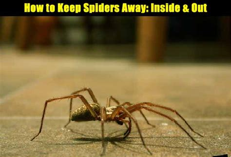 how to keep spiders away the prepared page