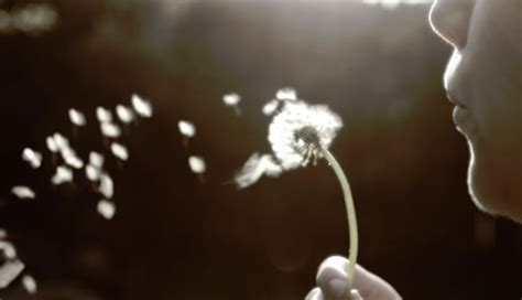 the wish destructive daydreams why wishful thinking is dangerous