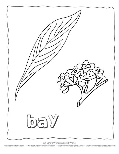 flower leaf coloring page flower leaves coloring pages download and print for free