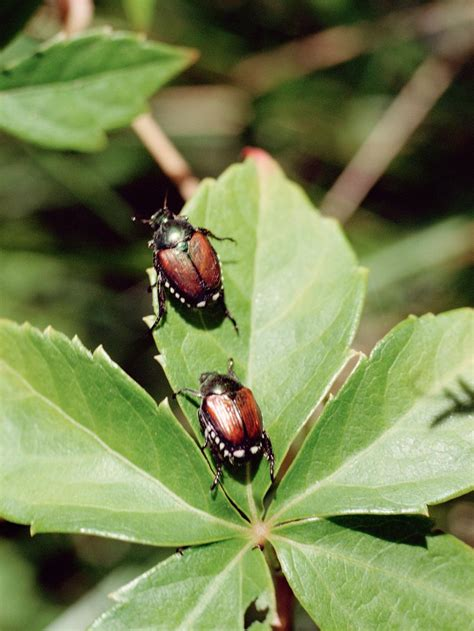 types of garden pests types of garden pests bugs that destroy plants hgtv