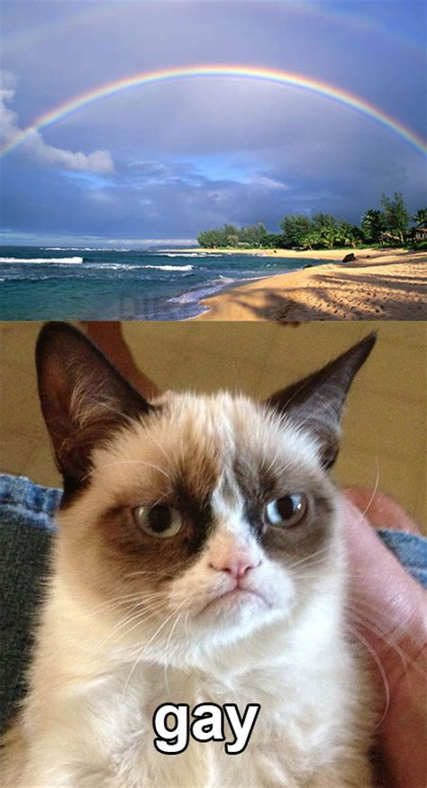Gay Cat Meme - gay grumpy cat know your meme