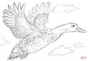 Mallard Duck In Flight Coloring Page Free Printable Mallard Duck Coloring Page