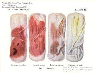 orgasmo interno l 211 quios pop procedimentos operacionais padr 227 o enfermagem