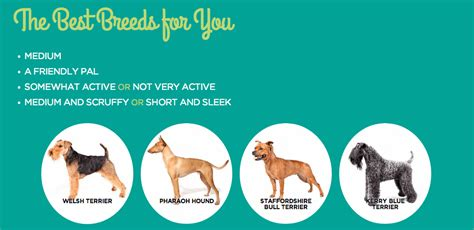breed finder breed finder by picture and some related aspects