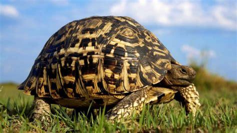 imagenes de libres y tortugas tortuga caracter 237 sticas tipos qu 233 comen d 243 nde viven