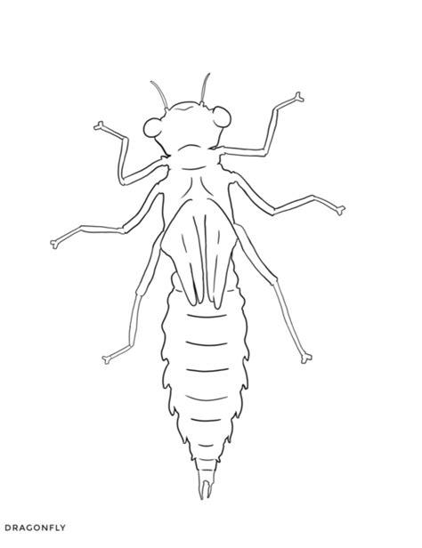 arthropod coloring page image gallery echinoderm worksheet arthropod coloring