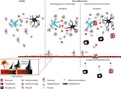 innate immunity a question of balance ora 100 innate and adaptive immune defects
