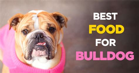 best food for bulldogs best food for bulldogs a guide to bulldog nutrition health