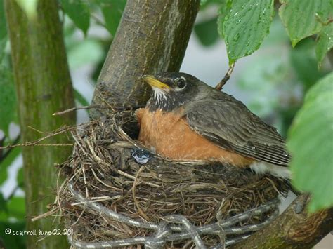 into the woods and elsewhere praise for a baby robin