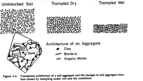 pattern formation particle aggregation figure 6 2
