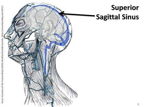 Sagittal Sinus Anatomy