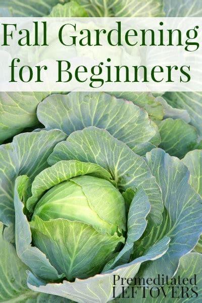 How To Start A Flower Garden For Beginners Fall Gardening Ideas Photograph Fall Vegetable Garden