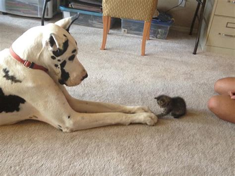 how to a cat and to get along 10 pics proving that cats and dogs can be best friends bored panda