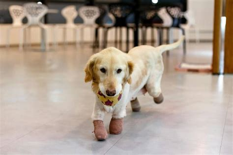 puppy in korean the puppy who survived slaughter house to find
