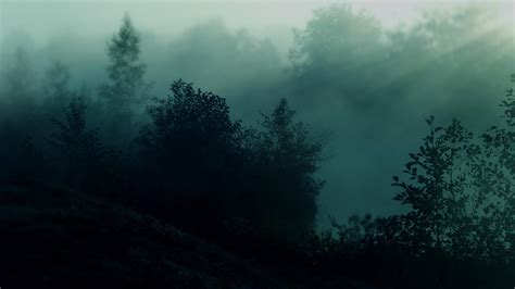 Dark Environment Wallpaper | dark forest wallpapers wallpaper cave