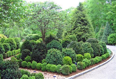 shrub garden design ideas shocking live boxwood topiaries decorating ideas images in