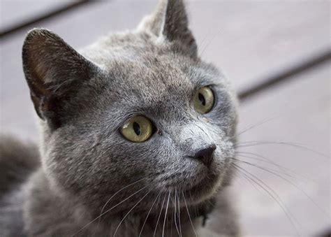 imagenes de gatas blancas nombres para gatas y gatitas originales
