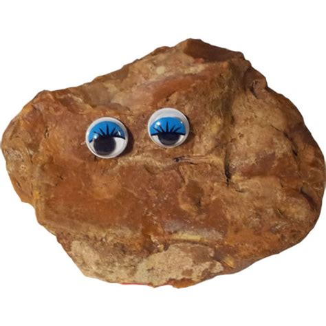 pet rocks rocks make great pets buy online