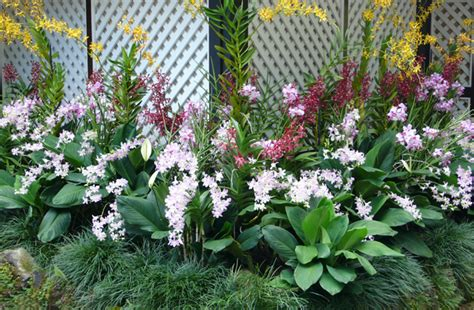 Orchid Garden by Orchids Garden Of The East Indoor And Outdoor Tropical