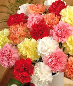 Facts About Carnations in season flowers for summer weddings