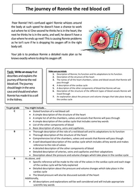 Circulatory System Essay sjbarlow s shop teaching resources tes