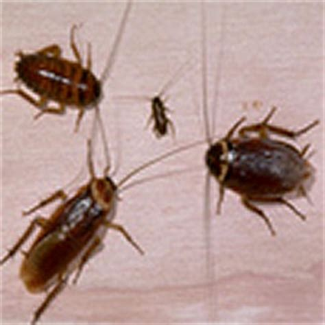 bed bug heat treatment effectiveness how to get rid of spiders in the house conkers how to