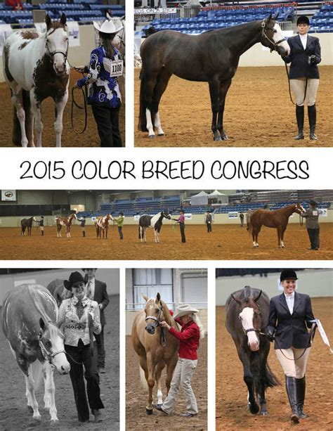 color breed congress day 1 around the rings at 2015 color breed congress