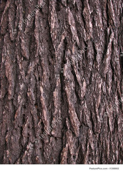 picture of pine tree bark detail