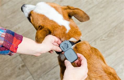 whistle tracker review travel gear whistle 3 pet tracker review