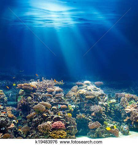 stock images of sea or ocean underwater coral reef