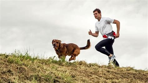 running with dogs how to safely run with your s journal