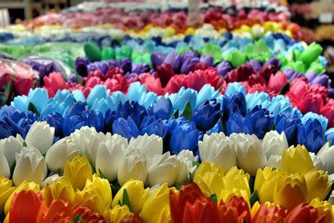 fiori olanda tour olanda in fiore profumi e colori in mezzo ai tulipani
