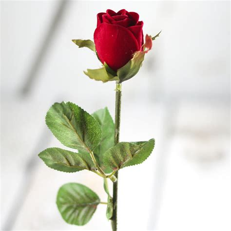 rose bud with stem www pixshark com images galleries