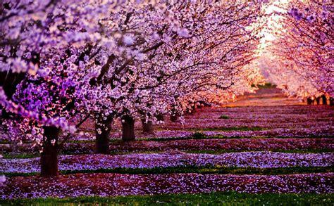 imagenes de paisajes muy hermosos imagenes de paisajes naturales hermosos del mundo
